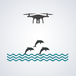 Illustration of video drone over wild sea dolphins