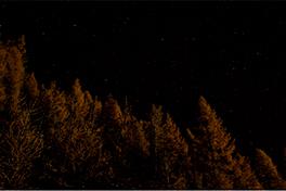 Mørk skog, natt.